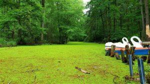 صورشمال : حديقة سراوان البرية